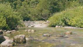 浇灌在石头中的射流在夏天森林美好的狂放的自然 影视素材