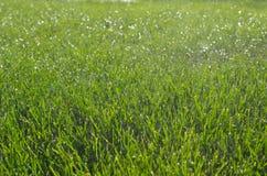 浇灌在绿草的自动喷水隆头 免版税库存图片