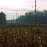 浇灌在草的下落 免版税图库摄影