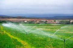 浇灌在领域的农业喷水隆头, 库存图片