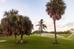 浇灌在高尔夫球场的清早在佛罗里达 免版税库存照片
