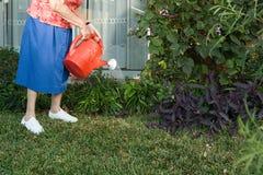 浇灌庭院的资深妇女 免版税库存图片