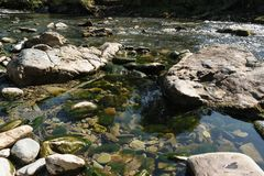 浇灌显示岩石的小河流经岩石的和水坑被盖在绿藻类 库存照片