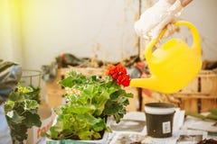 浇灌最近被种植的花 图库摄影