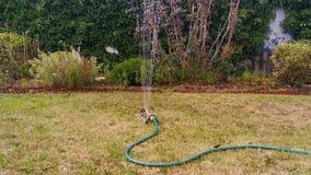 浇灌有一台自动庭院喷雾器的草草坪,关闭水喷水隆头,喷洒的水在后院 影视素材