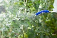 浇灌植物 免版税库存图片