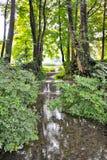 浇灌流经从湖森林 免版税库存图片