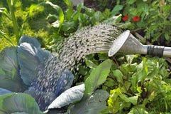浇灌的庭院 图库摄影