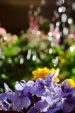 浇灌的花 图库摄影
