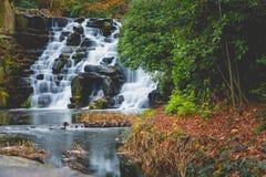 浇灌秋天岩石小瀑布在秋季的行动迷离 库存图片