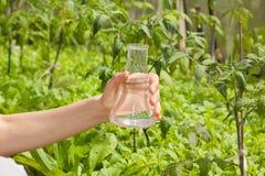 浇灌纯净测试,在实验室玻璃器皿的液体 免版税库存照片