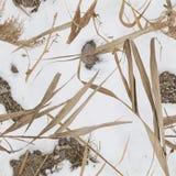 浇灌芦苇、雪和岩石鸭子猎人的样式伪装 免版税图库摄影