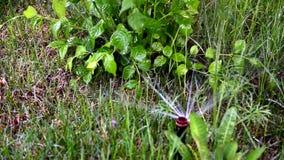 浇灌草坪在庭院或公园里在夏天 股票录像