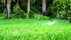 浇灌草坪在庭院或公园里在夏天 影视素材