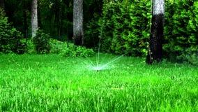 浇灌草坪在庭院或公园里在夏天 股票视频