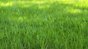 浇灌草坪 股票视频