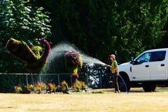 浇灌草雕象的园艺女职工 免版税图库摄影