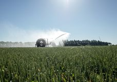 浇灌领域的灌溉枢轴 库存照片