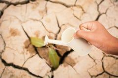 浇灌高明的干燥地面的男孩的手一点绿色植物 库存照片