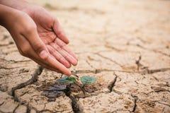 浇灌高明的干燥地面的男孩的手一点绿色植物 免版税库存图片