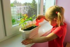浇灌年幼植物的小女孩 免版税图库摄影