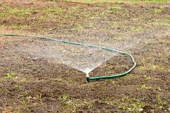 浇灌从水管的一个菜园有喷雾器的 免版税库存照片
