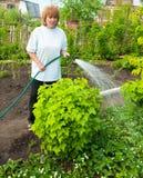 浇灌绿色庭院的妇女 免版税库存照片