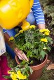 浇灌黄色花的女孩和祖母的播种的图象 免版税库存图片