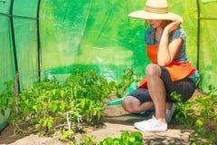 浇灌绿色西红柿的妇女自温室 库存图片