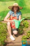 浇灌绿色西红柿的妇女自温室 库存照片