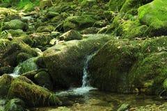 浇灌从Belasistsa佩特里奇,保加利亚的自然风景 免版税库存照片
