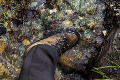 测试一个对山鞋子 免版税图库摄影