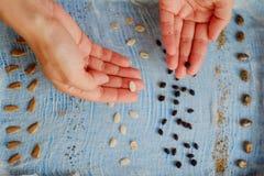 测试对于种子在一个潮湿环境里,拿着种子的手的萌芽 免版税库存图片