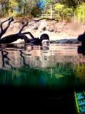 测试水中的6个洞 库存照片
