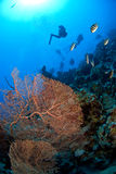 测试水肺的潜水员 库存照片