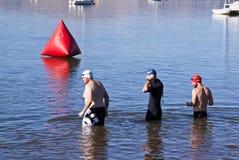 测试水的三位游泳者在游泳种族前 免版税库存照片