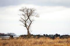 济州石头公园孤立树草原 免版税库存图片