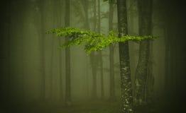 浓厚雾 图库摄影