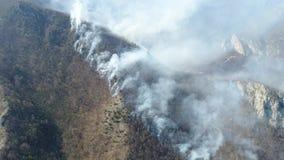 浓烟一个移动的空中英尺长度在森林 股票录像