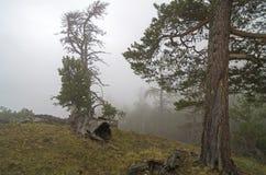 浓雾在山森林里。高加索。 免版税库存照片