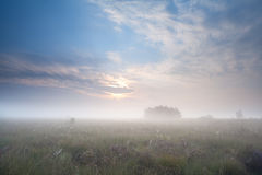 浓雾的草甸在日出期间 库存照片