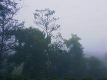 浓雾 图库摄影