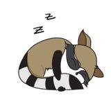 浣熊动物逗人喜爱的小的动画片 免版税库存图片