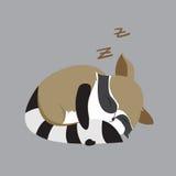 浣熊动物逗人喜爱的小的动画片 图库摄影