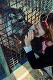 浣熊在动物园欢迎女孩 免版税库存图片