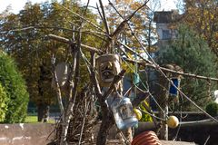 浣熊在风雨棚坐在动物园里 免版税库存照片