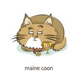 浣熊缅因 在白色的猫字符 免版税库存图片