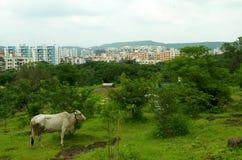 浦那城市这混合的都市和农村 免版税库存照片