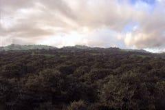 浩大的森林 库存照片