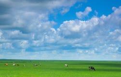 浩大的绿色大草原 图库摄影